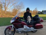 Dog Gone Goldwing